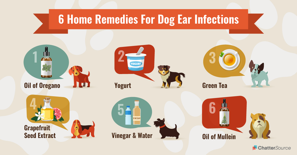 6 home remedies for dog ear infections infographic