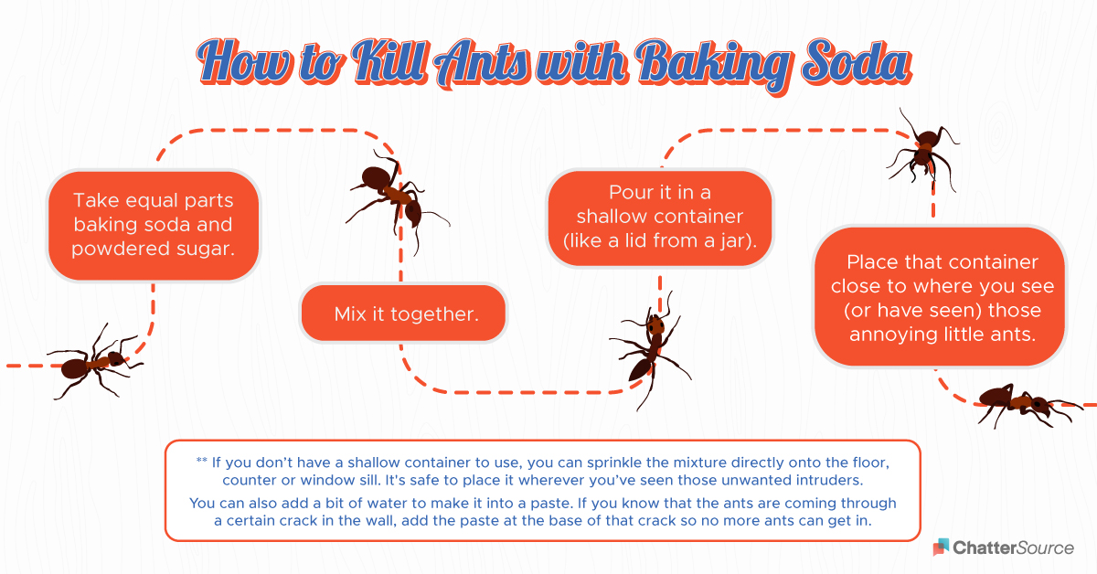 How to kill ants with baking soda infographic
