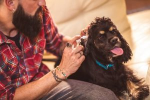 Man trying home remedies for dog ear infections