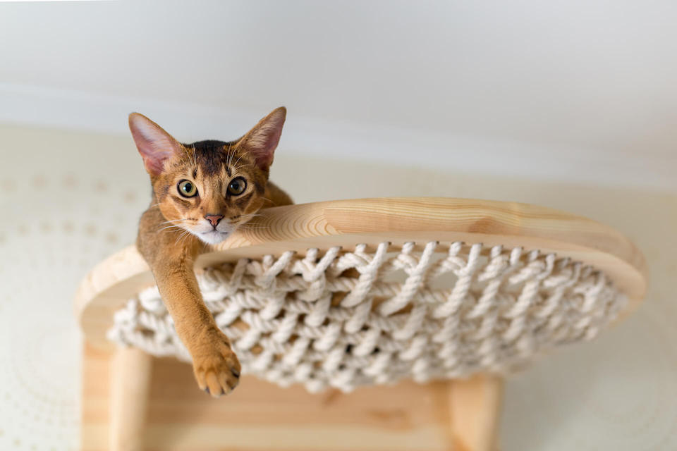 Cat relaxing at the top of a cat tree