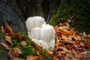 mushrooms growing by a tree