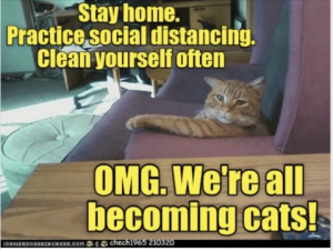 Cat lounging in a chair with the text: Stay home. Practice social distancing.  Clean yourself often. OMG. We're all becoming cats!