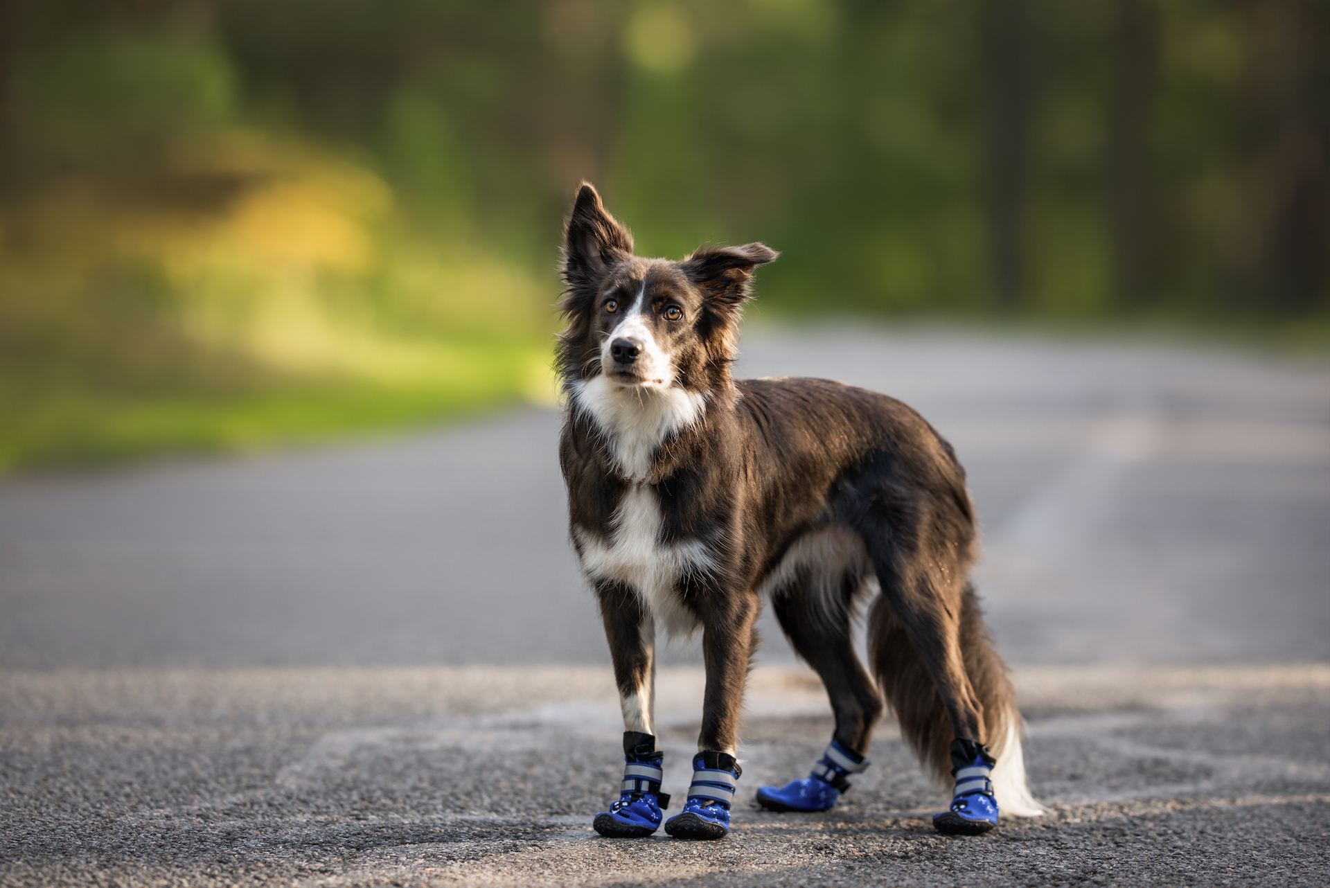 The 7 Best Dog Shoes/Boots For Hot Pavement [For Summertime Walks]