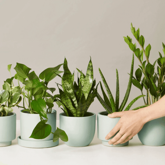 Woman holding plants from the Sill subscription box