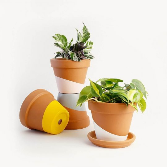 Plants from Horti