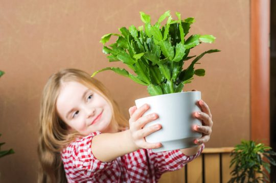 Young girl holding a Christmas Cactus out in front of the camera