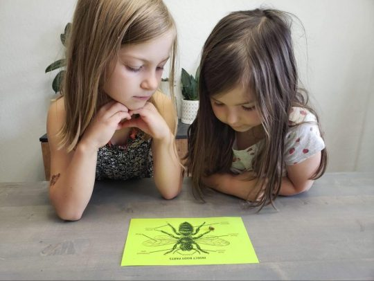Two girls looking at bee anatomy