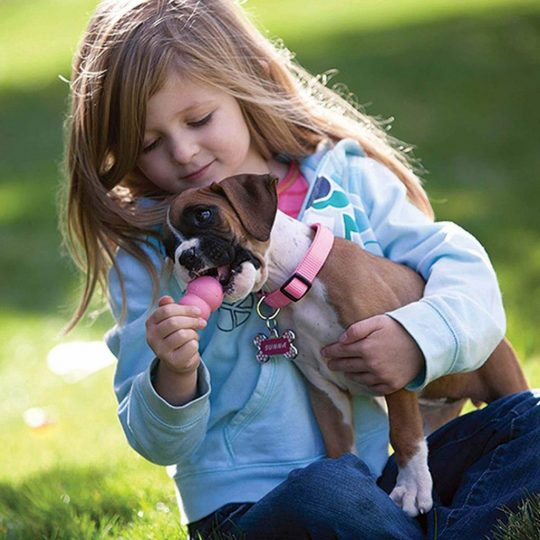 Young girl giving her boxer puppy a pink kong
