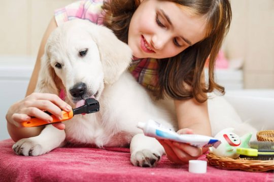Young girl brushing her puppy's teeth