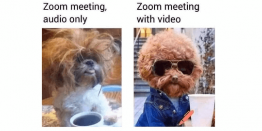 Dog looking rough for a Zoom Meeting, audio only and looking fly with a zoom meeting with video