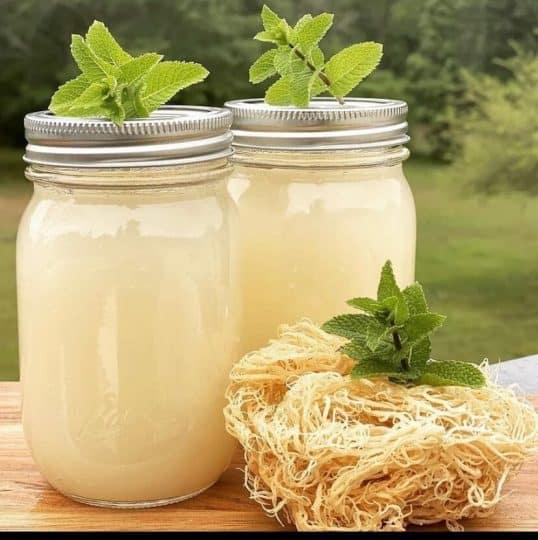 Sea moss next to two jars of sea moss gel