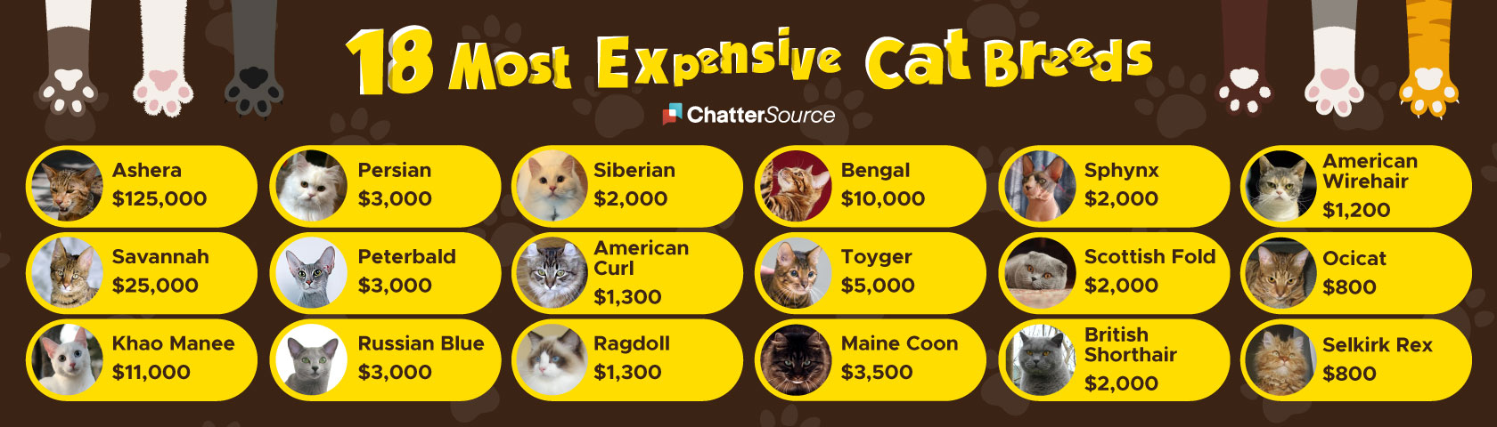 Most expensive cat breeds infographic