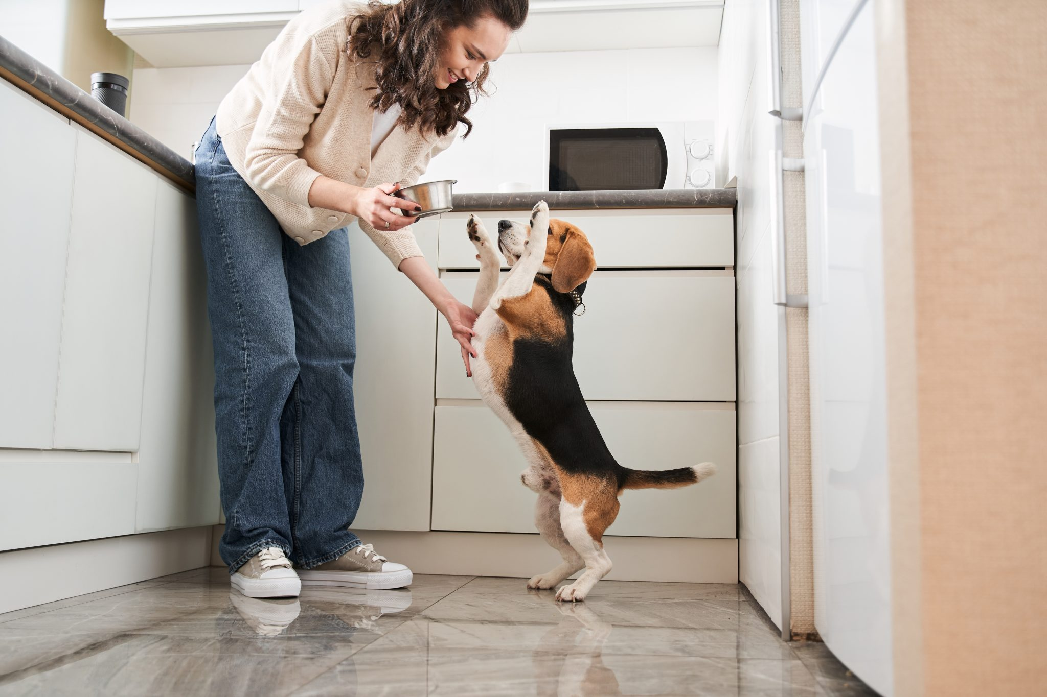 Woman holding a bowl down for her happy beagle