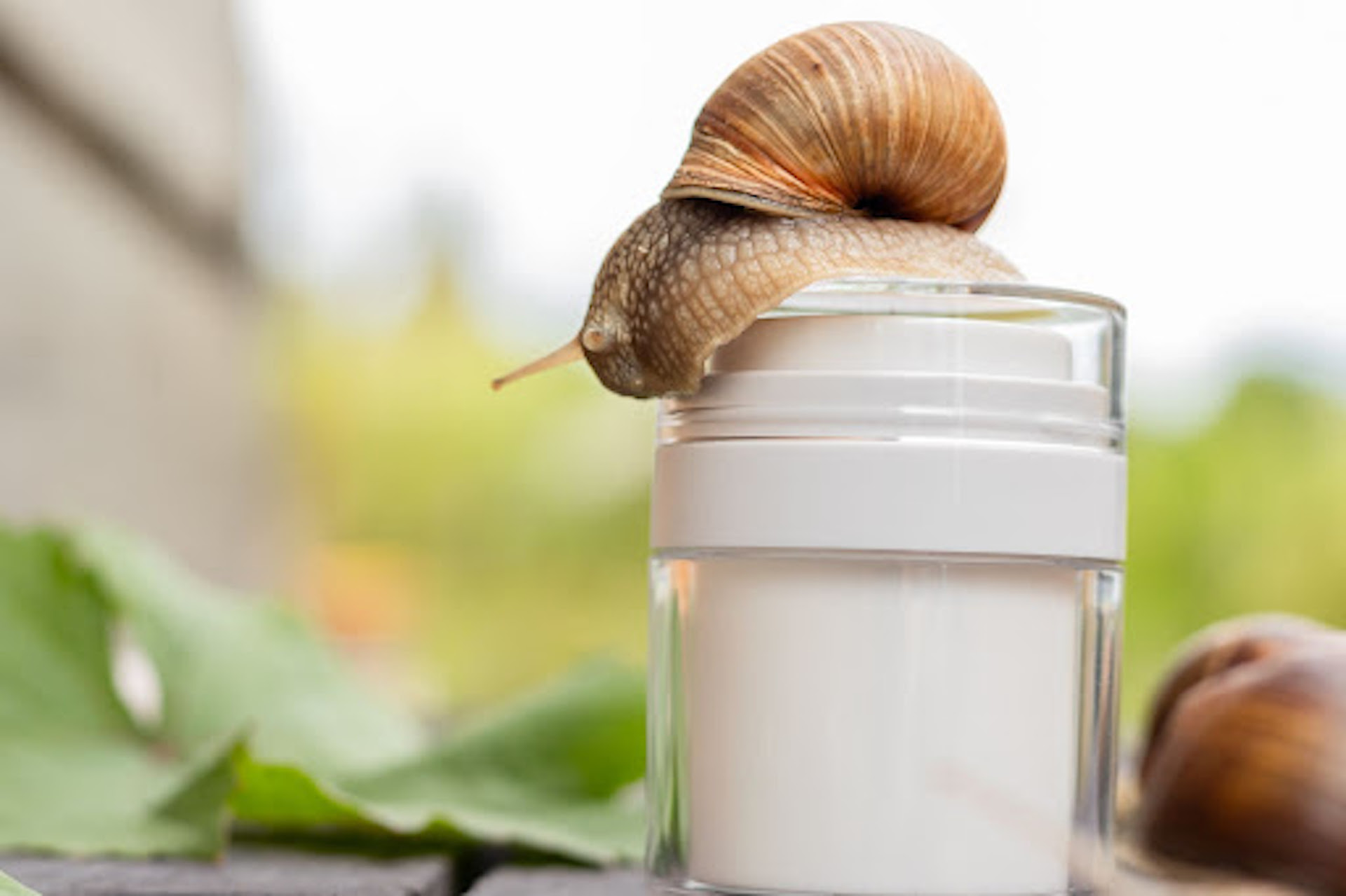 Snail on a bottle of face cream