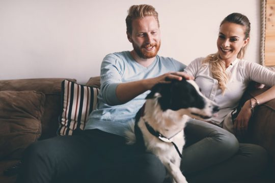Man and woman sitting on an oversized deep couch, petting a border collie