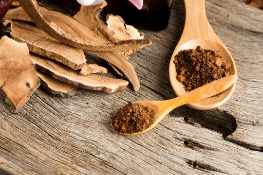 Mushroom Extract Powder in a wooden spoon