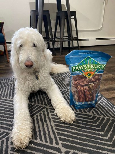 Adorable labradoodle next to a bag of Pawstruck's 7 Inch Braided Bully Sticks