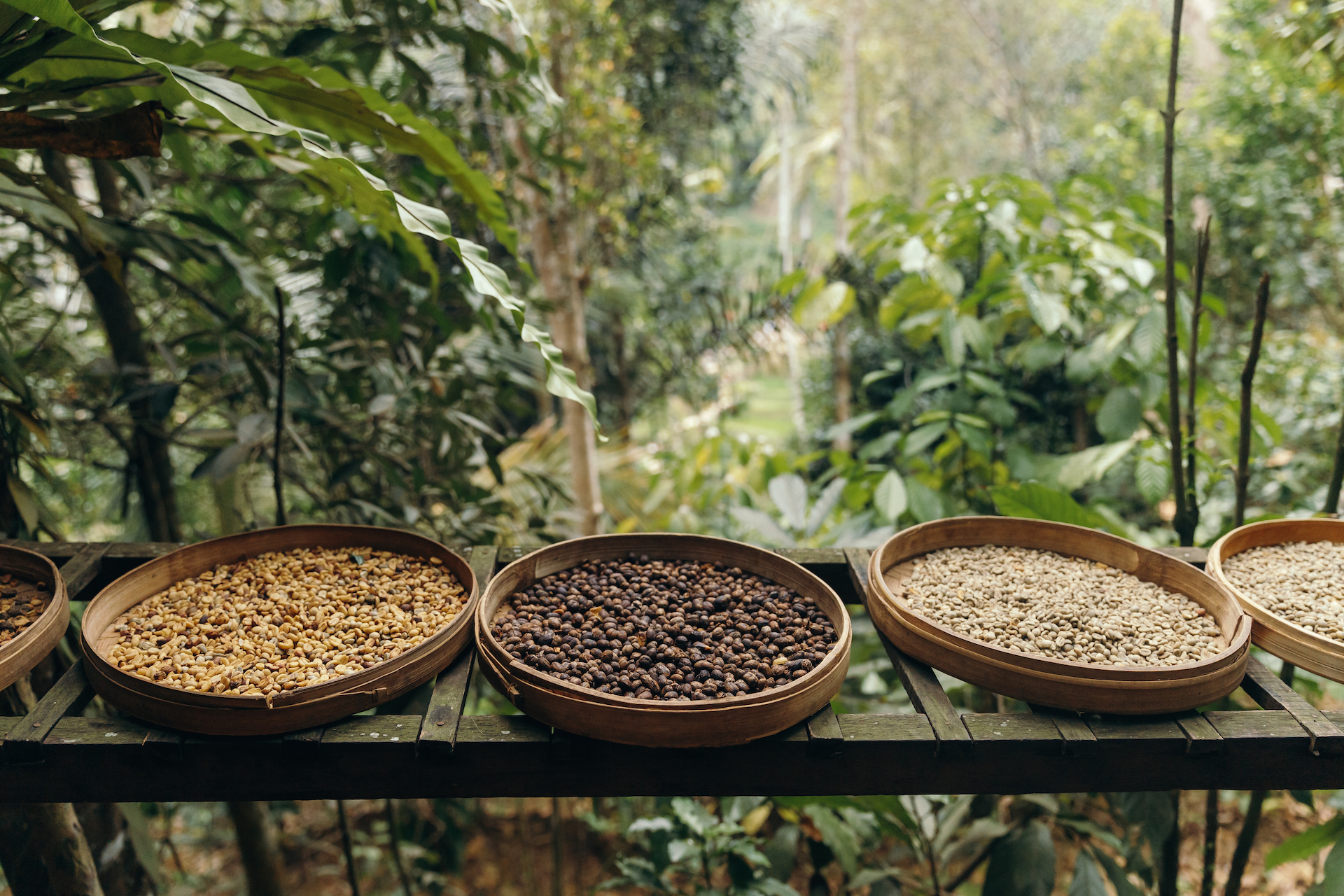 different type of roasting coffee beans