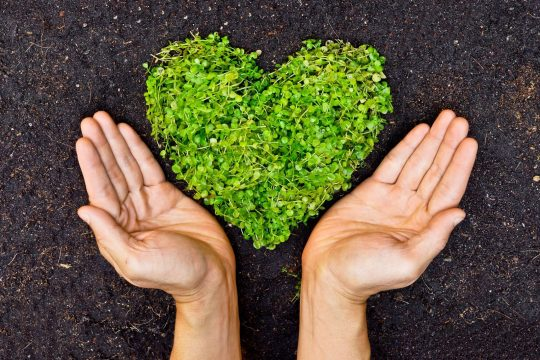 Hands showcasing a heart made out of microgreens on the soil